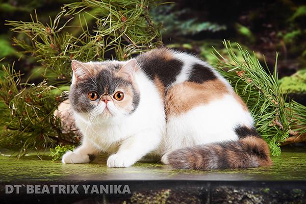 DT`Beatrix Yanika