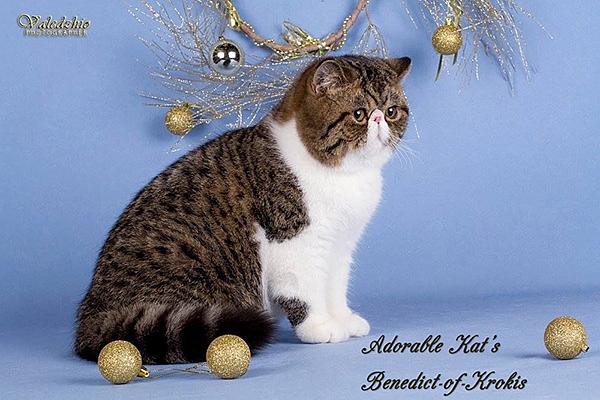 EXO Adorable Cat*s Benedict-of-Krokis