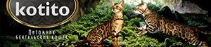 kotito - ваш домашний леопард - питомник бенгальских кошек