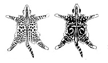 пятнистый-мраморный