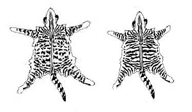 тиккированный-полосатый