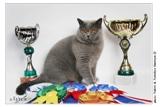 12 июня Выставка кошек Кубок Зеленограда